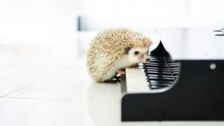 鍵盤に前足を置くハリネズミ